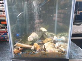 Fish tank all set