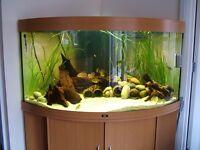 Jewel Trigon 350 bow fronted fish tank & stand