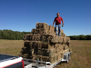 Square Brome Hay Bales For Sale