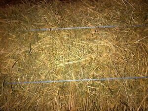Straw. Small square bales
