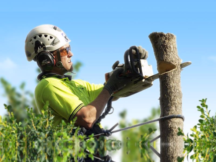 Tree Services - Compare Best Local Companies Prices
