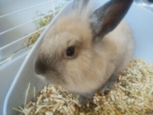 Rabbits for rehoming