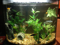 26 gallon bow front aquarium complete with fish
