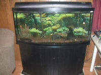 GORGEOUS LARGE FRESH WATER FISH AQUARIUM WITH PUMP