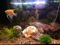 Tropical fish tank / aquarium and fish