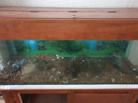 5 foot, 100 gallon tropical aquarium setup. COLLECTION ONLY