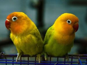 Home for unwanted parrots.