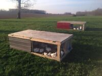 Finish chickens for sale