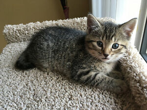 One kitten girl available