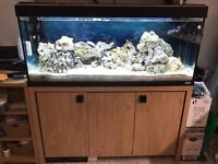 4 ft Fluval Roma 240 marine tropical cold water fish tank with setup (delivery installation)