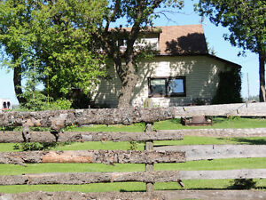 Cutest country charm on 5 acres Strathcona County Edmonton Area image 2