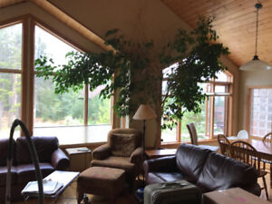 Room for rent in a 3 BR house in Peaks of Grassi for Oct 1