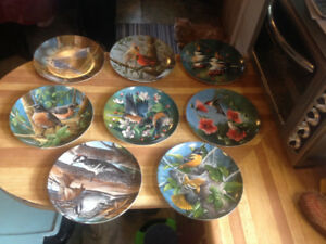 Birds of Your Garden Collector Plates by Kevin Daniel