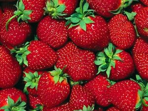 Mabels Market VALLEY STRAWBERRIES $2.75 Buy Local