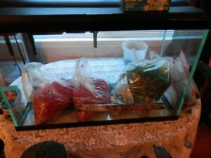 Complete fish Aquarium and more