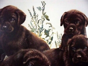 """Hand Signed Lithograph by Amy Brackenbury """"Chocolate Cluster"""" Stratford Kitchener Area image 7"""