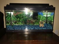 20 Gallon Fish Tank Looking for a Good Home!( SOLD pending p/u)
