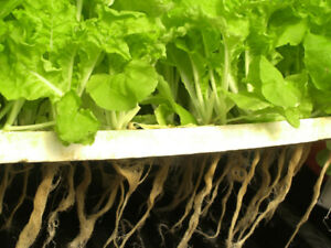 Hydroponic irrigation consultant and installation