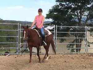 Suit the whole family QH mare Sandy Creek Somerset Area Preview