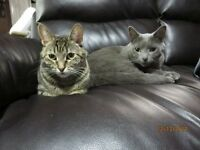 Are you looking to adopt 2 cats?