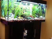 Fully set up Jewel 180lt 3ft tropical aquarium