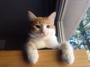 Male 3 yr old Cat looking for forever home!