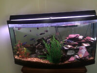 Like New - 80 Gallon Bow Faced Fish Tank For Sale