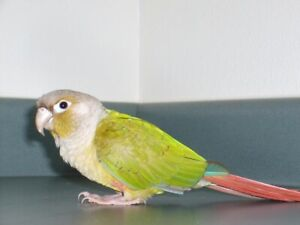 Adopting All Birds - Experienced Home