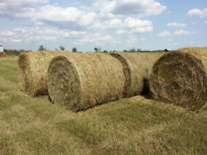 Hay Bales Rounds