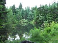 Chalet en forest