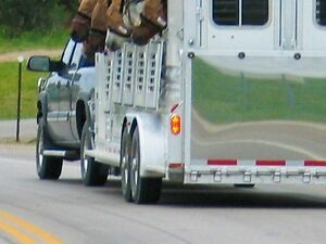 ATTENTION HORSE RIDERS - TRAILERS MUST HAVE STICKERS
