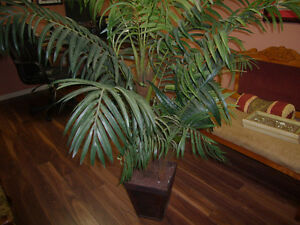 Large 5' tall artificial plant