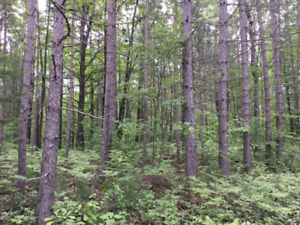 One or Two acre lots Great Bargain