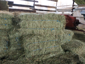 HAY for sale $6.  a bale