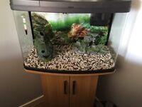 Fish tank 🐠🐟🐟