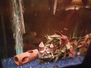 Looking for unwanted or unused fish tanks and accessories