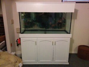 90 Gallon Fish Tank with cupboard stand.