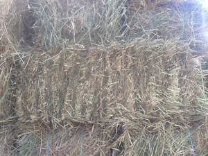 1st cut small bale hay