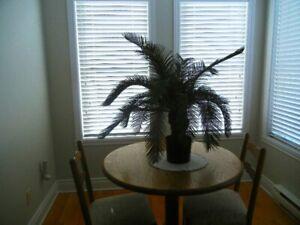 Palmier avec support à plante
