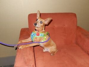 **Handsome Opa - MIN PIN cross is available for adoption****
