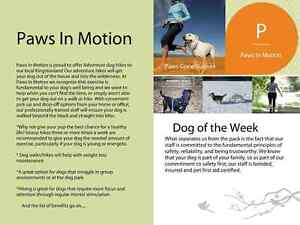 Kingston Paws In Motion