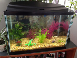20 gallon tank with fish and accessories for sale