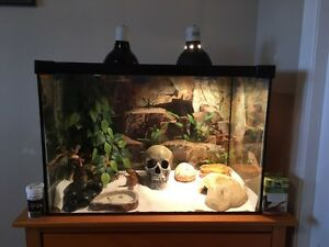 2 Female Leopard Geckos with Tank and Accessories