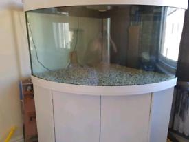 Corner aqaurium and stand 450 litres