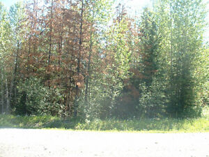 Gorgeous recreational lot in Hendrix Lake, BC