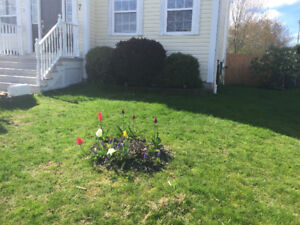 I need help designing my yard/garden/landscaping in Armdale