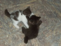 Adorable Kittens to give away to a good home.