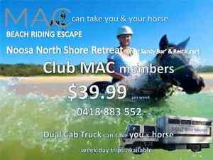 MAC Horse Transport Bundall Gold Coast City Preview