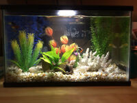 Beautiful 5 Gallon fish tank with everything for sale