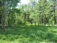 Sundre 160 Acres Rolling and Treed Land